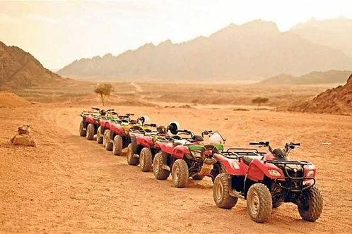 Туристические экскурсии по Египту Business Lisence