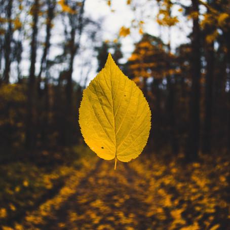 Autumn...A Season of Letting Go