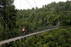 Maramataha bridge, Timber Trail