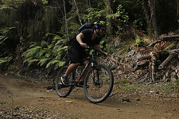 Timber Trail Bike Hire