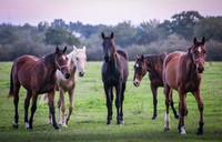 Pension chevaux Haras des Naudieres.jpg