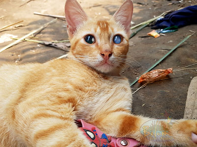 Blind cat in Asli village
