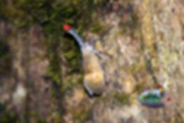 lanten bug 3.jpg