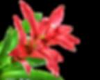 fleur amazonie.png