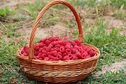 корзинка малины