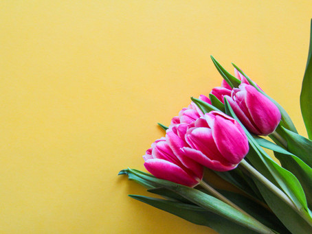 Tulip Season Has Arrived- Why You Should Send Someone Tulips This Spring