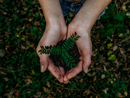 5 Ways You Can Incorporate A Greener Initiative In Your Office