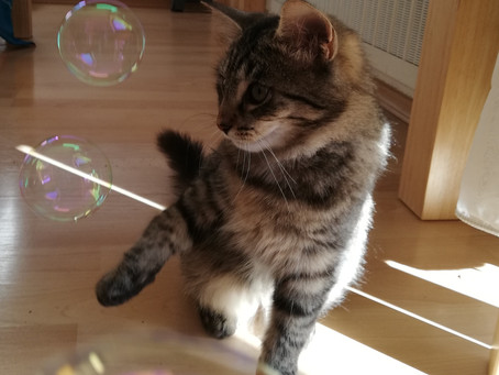 Tierheim Katze - worauf muss ich achten?