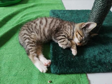 Tipps zum Umgang mit Katzenbabys