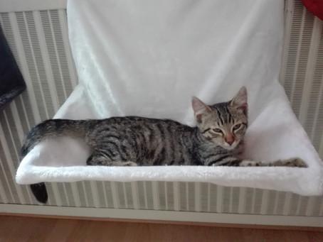 Katze verstehen, aber wie?