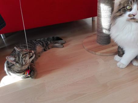 Spielen mit der Katze!?!