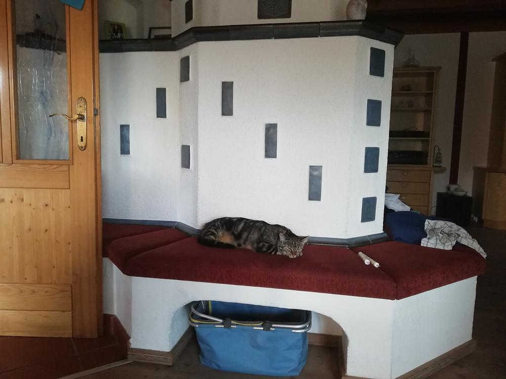 Katzenzusammenführung; gleich nach gesetzten ersten Maßnahmen betrat die Tigerdame wieder das Wohnzimmer und entspannte deutlich