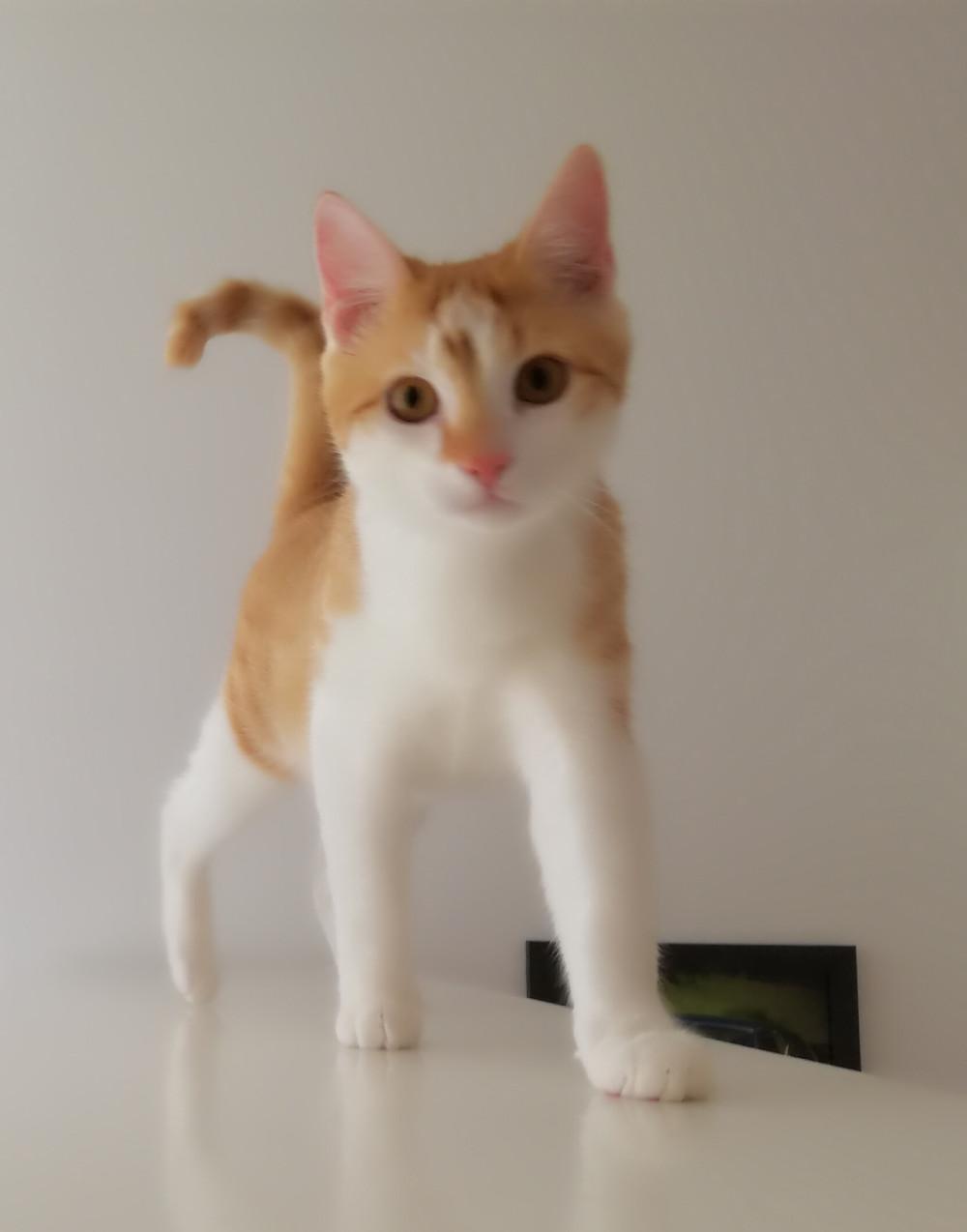 Unsauberkeit: Katzenspielzeug und Katzenklo halfen dabei die Unsauberkeit in den Griff zu bekommen