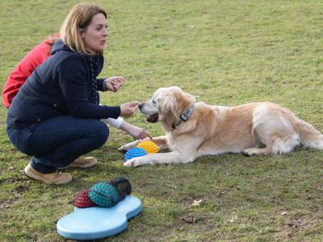 Hund im Alter: Tipps für Hundesenioren