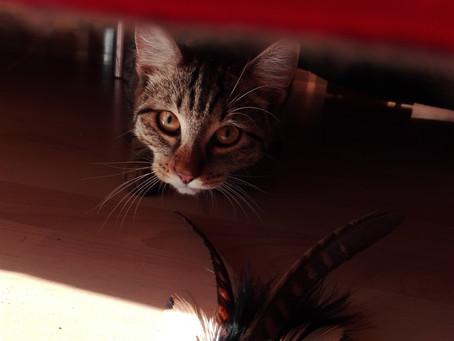 Katze jagt