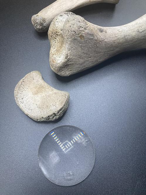 Box No.53 - 3 bones and a lens