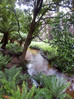 Lilly Pilly Gully Circuit -Sunday 19 April