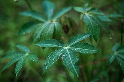 leaves-3560567_1920.jpg