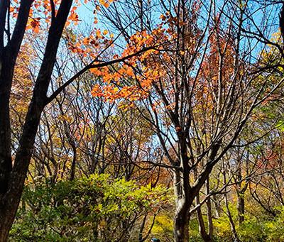 琴引山の紅葉