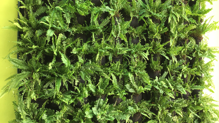 Fern on wall with VERTILIVIN Greenwall System
