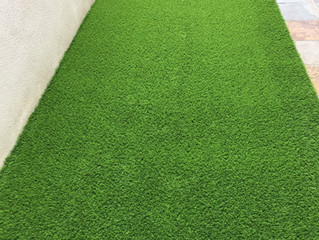 PREMIER GRASS just changed the look of backyard cement ground @ Greenlane
