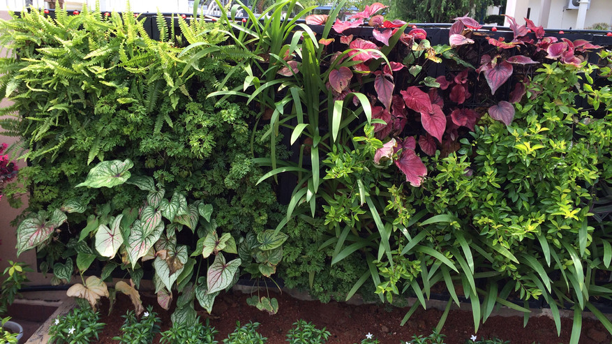 VERTILIVIN Greenwall System at Chain Ferry Residence