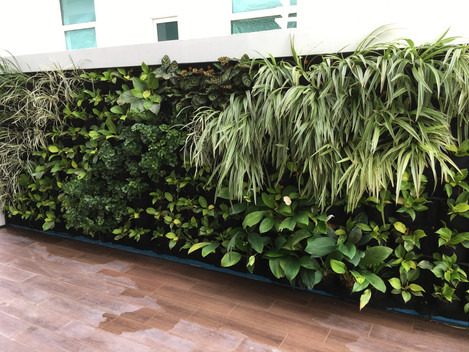 Wall Plant by VERTILIVIN Greenwall System.