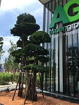 Landscape Tree Supply