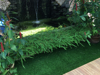 Premier Grass on Roof Garden