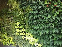Vertilivin Vertical Garden System