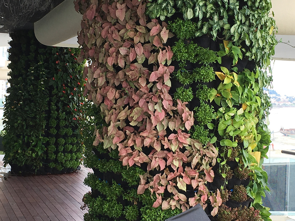 Vertilivin Greenwall System