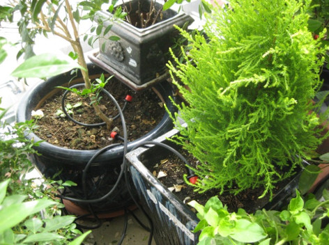 Potted Plants Watering System