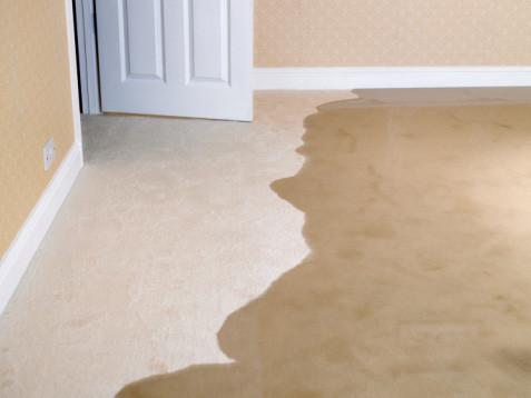 Water Damamged Carpet