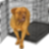 Cage-free dog boarding