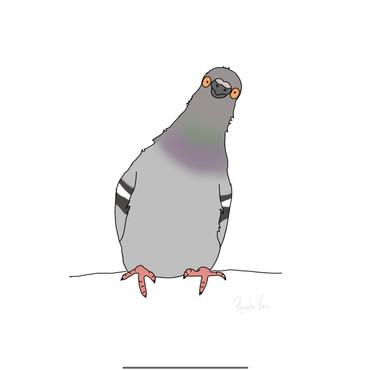 Santa Cruz Pigeon
