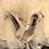 Thumbnail: Ariel水晶紅毯宴會鞋・RS200110 (Beige)