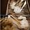 Thumbnail: 可愛輕薄紗花飾・IA131204(Ivory)
