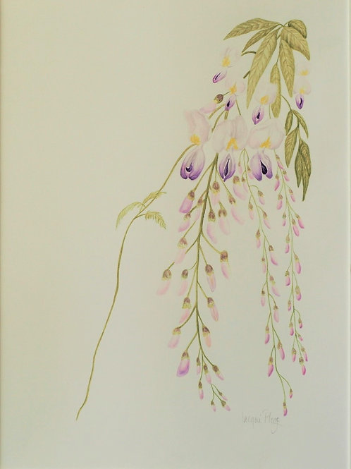 Wisteria by Jacqueline Ploog