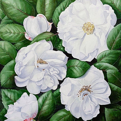 White Roses by Lesley Hall