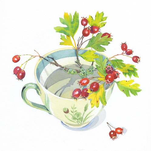 Hawthorn Berries by Mary Woodin