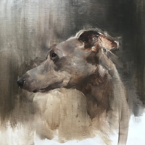 Whippet by Sophie Cook