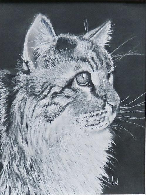 Cat in Shadow by Lee Nightingale