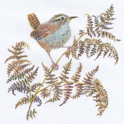 Winter Wren by Mary Woodin