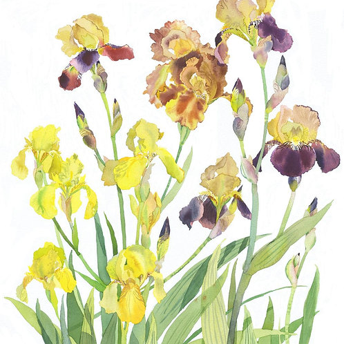 Yellow and Golds by Mary Woodin