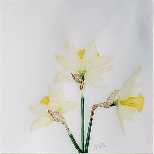 Daffodils by Jacqueline Ploog
