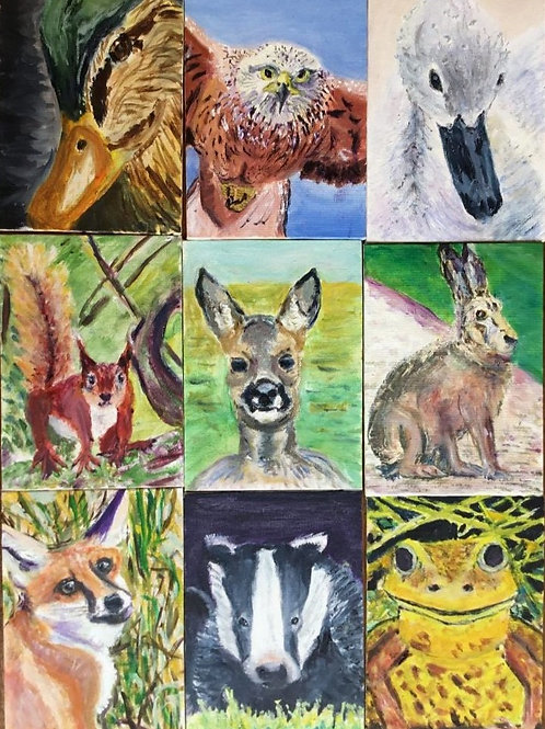 Collection of Wild Animals by Chris Ashworth
