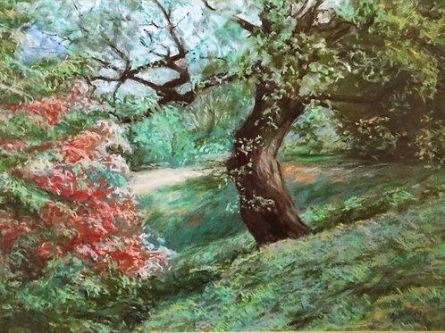 Red Bush, Greenwich Park by Ann Hillary