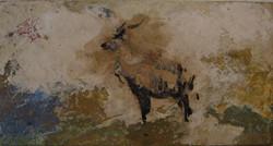 Antilope Eland