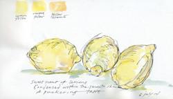 Lemon Haiku