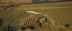 monteru-vineyard-1_Cropped.jpg